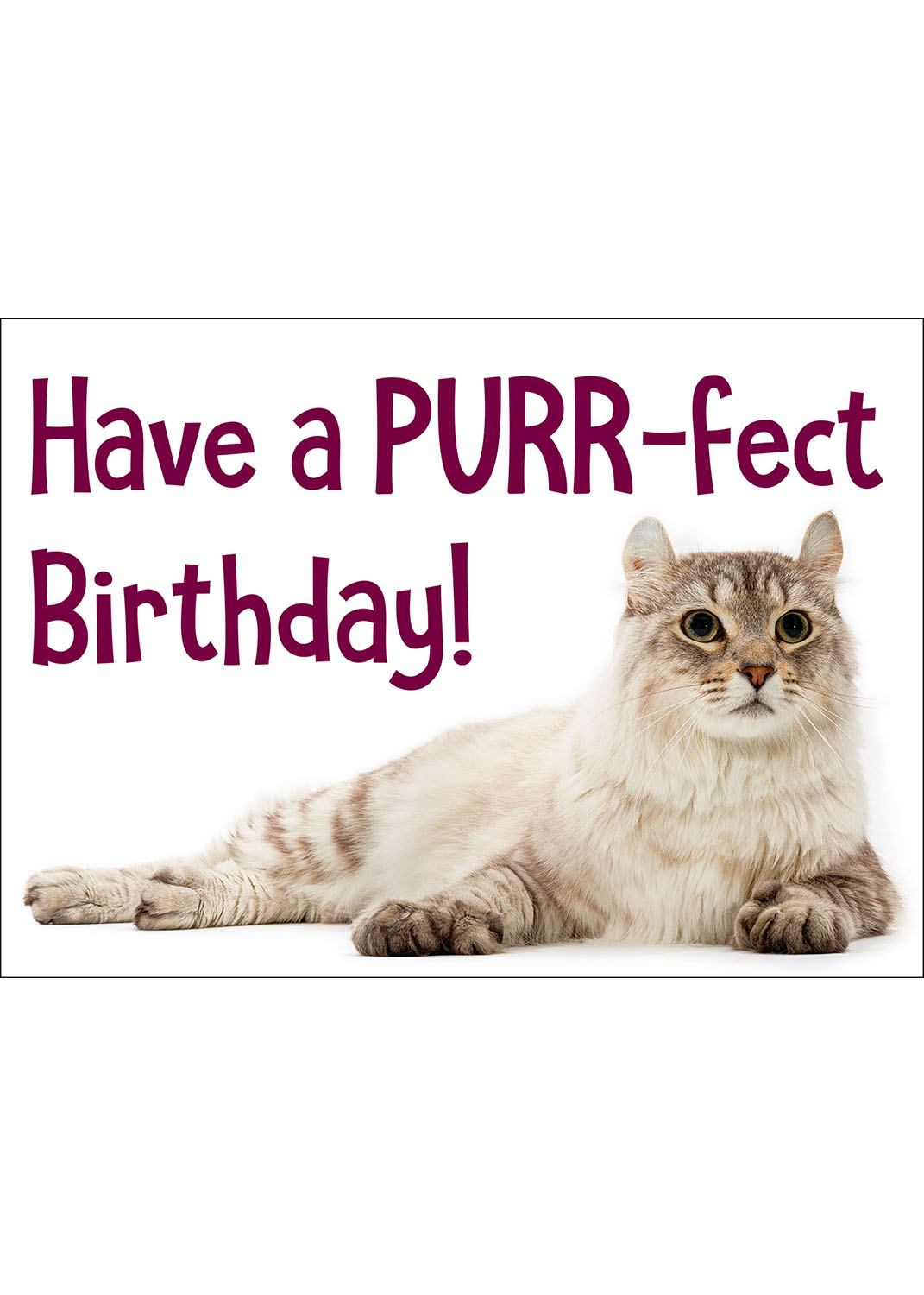 happy cat birthday card  curious critters